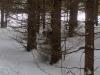 cosro di mimetismo invernale